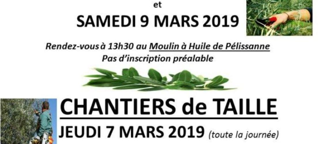2019-affiche taille des oliviers
